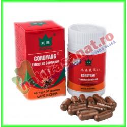 Cordyang 497 mg 30 capsule - Yong Kang - Co&Co Consumer - www.naturasanat.ro