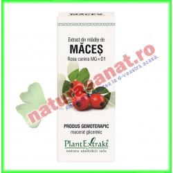 Extract din mladite de maces 50ml - PlantExtrakt - www.naturasanat.ro